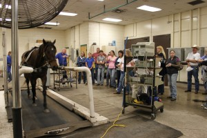 Registrants from last year's Healthy Horses Conference watch horses working out on a high-speed treadmill.