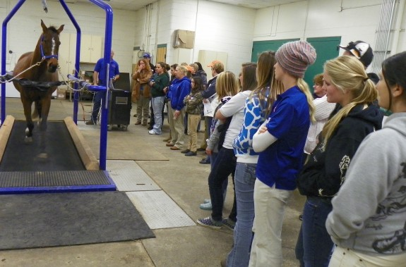 Treadmill demonstration at Equine Education Day
