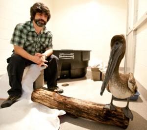 Dr. Jim Wellehan and pelican