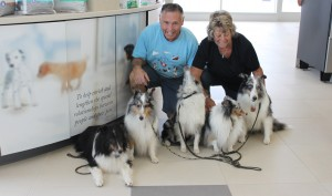 Therapy dogs - shelties