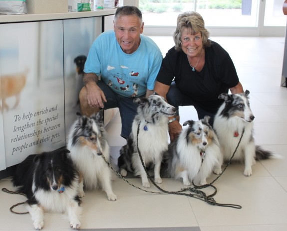 Shelties at UF for dental screenings