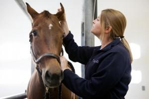 Dr. Sarah Reuss with horse