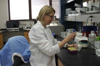 Dr. Beata Clapp at work in her mentor, Dr. David Pascual's lab.