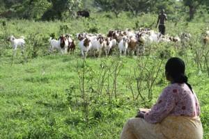 Woman in field in Senegal