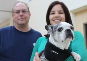 Mishka, a Boston Terrier, and Dr. Fishman