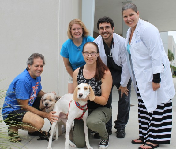 Gilligan, a rescued hound, is pictured at center with his canine pal, Bonnie, and his new owners, David Cheney and Tana Richardson. The couple fostered and later adopted Gilligan after Tana found him near death during a bike ride outside of Gainesville. Behind the couple are Michelle Dunlap of Phoenix Animal Rescue, third-year UF CVM student Ben Brunson and Dr. Carrie Santare, a UF veterinary neurology resident, on Sept. 27. Gilligan received surgery at UF to stabilize a broken back. (Photo by Sarah Carey)