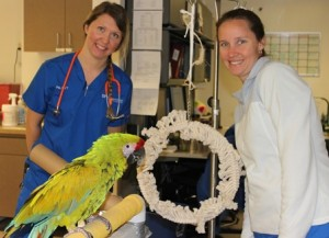 Zoological medicine technicians Pia Lindstrom and Sarah Purcell are shown with ?, a resident of the zoological medicine ward, on Oct. 8.