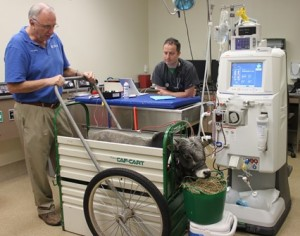 Zebu getting hemodialysis