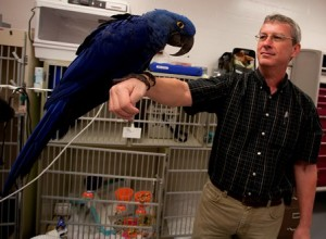 Dr. Heard with blue macaw