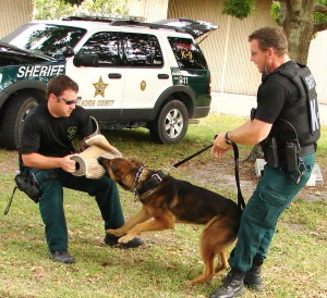 Gainesville police officers are shown providing a K-9 demonstration during Open House in 2011. (File photo)