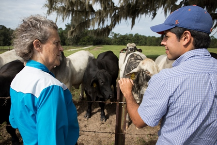 Dr. Gabriel Gomes, a resident with UF's food animal reproduction and medicine service, chats with Dr. Temple Grandin during her tour of the Santa Fe beef unit.