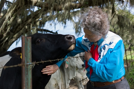 Dr. Tample Grandin gets to know one of the bulls at the Santa Fe beef unit.