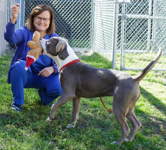 Dr. Julie Levy plays with a dog currently up for adoption at the Alachua County Animal Services facility in Gainesville on Feb. 10. (Photo by Mindy Miller)