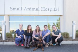 Doberman Pinscher with UF veterinarians