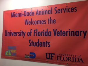 New student shelter medicine clerkship begins at Miami-Dade Animal Services.